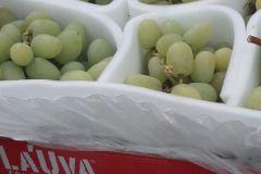 la-uva-1