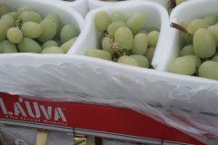 la-uva-4